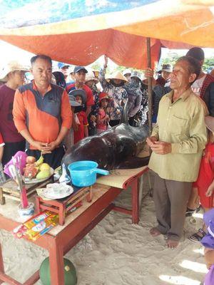 Giải cứu cá heo nặng hơn 100kg dạt vào bờ biển Hà Tĩnh