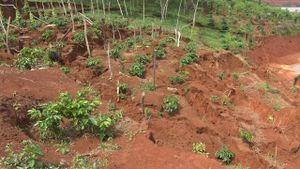 Sạt đất gần hồ bùn thải đuôi quặng ở Đác Nông