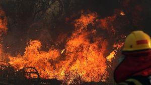 Rừng Amazon đang cháy với tốc độ kỷ lục