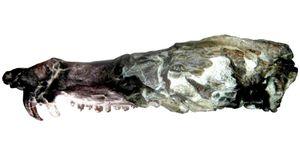Phát hiện hóa thạch giống con sóc trong phim Kỷ băng hà