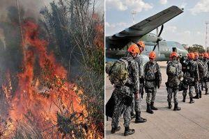 'Lá phổi thế giới' cháy dữ dội, Brazil điều hàng vạn lính dập lửa