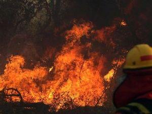 Cháy rừng Amazon: Phát quang để tận dụng đất rừng và hậu quả thảm khốc