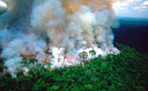 'Lá phổi xanh' Amazon kêu cứu