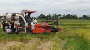 Hà Tĩnh gặt vội gần 30.000 ha lúa hè thu 'chạy' bão Podul