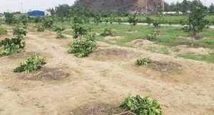 Thuê người chặt phá vườn cây của chủ tịch xã vì... tức giận