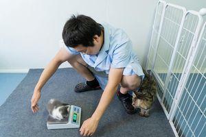 Mất 35.000 USD tạo ra bản sao mèo cưng quá cố