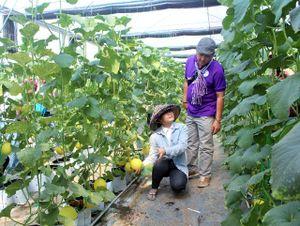 Nông nghiệp công nghệ cao kết hợp với du lịch trải nghiệm