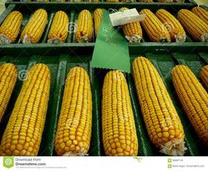Thị trường nông sản thế giới biến động mạnh