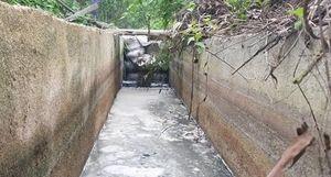 Nhà máy tinh bột sắn không xử lý nước thải xả thẳng ra môi trường