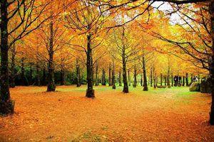 Đến Đài Loan mùa thu, thưởng ngoạn mùa lá đỏ