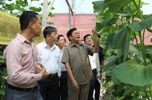Thủ tướng Lào ấn tượng với mô hình trồng rau sạch tại Đà Nẵng