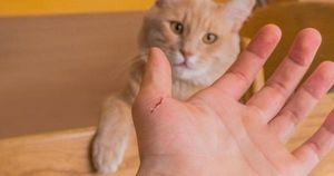 Hy hữu: Người đàn ông Cà Mau phát bệnh dại tử vong do bị mèo cắn