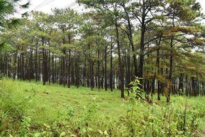 Thủ tướng yêu cầu báo cáo về 'rừng phòng hộ ở Đắk Nông bị bức tử'
