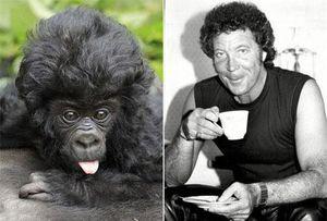 'Điêu đứng' vì khỉ con tóc xoăn đẹp trai như ca sĩ