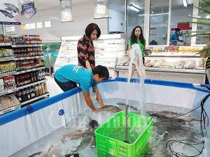 Hà Nội: Giới thiệu cá sông Đà đến người tiêu dùng Thủ đô