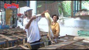 Thu nhập trăm triệu nhờ nuôi trăn