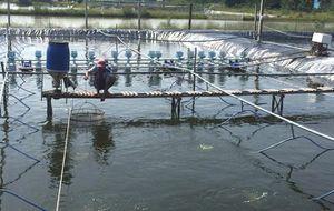 Cơ hội và quy định với nông thủy sản sang Trung Quốc