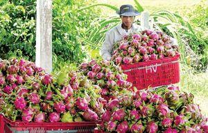 Xuất khẩu rau, quả 2019: Khó về đích