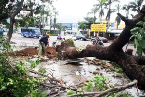 Bão số 5 đi qua, cây xanh ở Bình Định bật gốc la liệt