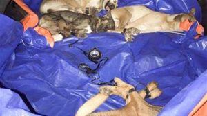 Cương quyết xử lý trộm chó, không nhận 15 triệu đồng