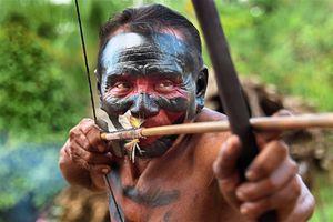 Rừng Amazon bị tàn phá để nuôi sống đất nước cách Brazil 17.000 km