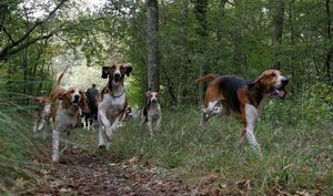 Cô gái mang bầu bị chó săn cắn thiệt mạng ở Pháp