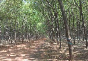 Thúc đẩy đầu tư nước ngoài vào ngành công nghiệp chế biến gỗ