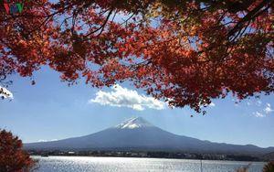 Êm dịu và quyến rũ bất tận của mùa Thu Nhật Bản