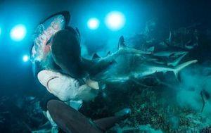 Ảnh động vật: Cá chết bí ẩn trong rừng, cò tình tứ...
