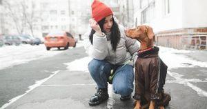 Softbank 'tháo chạy' khỏi ứng dụng dắt chó đi dạo Wag