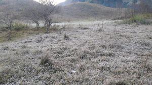 Băng giá phủ kín rừng cây bãi cỏ ở huyện biên giới Nghệ An