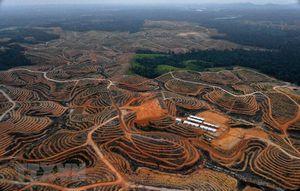 Indonesia: Thủ đô mới sẽ được hưởng quy chế của tỉnh tự trị