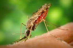 Khó khăn khi loại trừ bệnh sốt rét