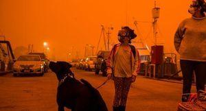 Australia đón 'cơn mưa vàng' giữa thảm kịch cháy rừng chưa từng có