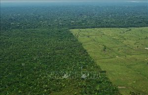 Diện tích rừng Amazon bị chặt phá lớn nhất trong 5 năm qua