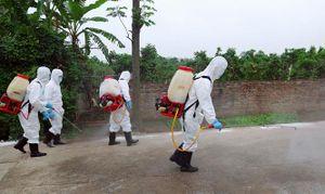 Phòng, chống bệnh cúm gia cầm: Kiểm soát chặt, không để bùng phát