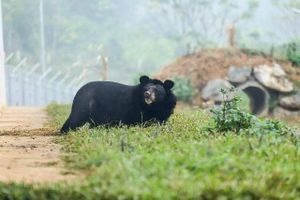 Trích hút mật gấu chỉ còn là cơn ác mộng trong quá khứ