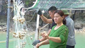 Kinh nghiệm của Hội LHPN huyện Vân Đồn