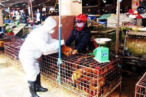 Nha Trang: Triển khai tiêm phòng gia súc, gia cầm năm 2020