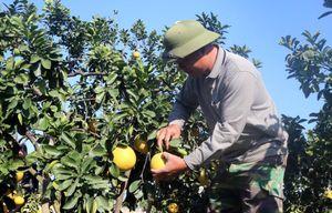 Hội Nông dân tỉnh: Khẳng định vai trò trong chính sách 'tam nông'