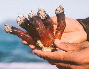 Giải mã bí ẩn 'ngón tay của quỷ' giữa biển khơi