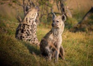 Top những loài động vật có tiếng kêu 'khủng' nhất thế giới tự nhiên