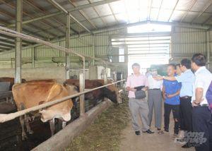 Hà Nam: Nhiều chính sách hỗ trợ để năm 2020 đạt 4.200 con bò sữa