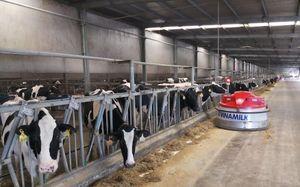 Hà Tĩnh: Đưa trang trại chăn nuôi bò sữa Vinamilk vào hoạt động, tạo việc làm cho hàng ngàn lao động