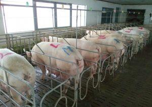 Bình Thuận: Chuyển mạnh chăn nuôi nhỏ lẻ sang trang trại, gia trại