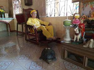 'Kỳ lạ' cụ rùa hơn trăm tuổi ở miền Tây biết... nghe kinh, ăn chay và giữ cửa