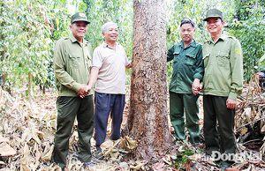 Không thể ''biến'' đất rừng giao khoán thành đất tư nhân