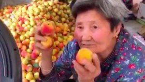 Cụ bà 80 trở thành người nổi tiếng trên mạng nhờ... quả mơ