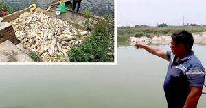 Hải Dương: Kỳ lạ đình chỉ điều tra vụ đầu độc cá