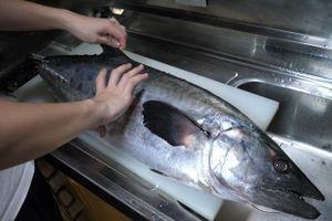 Đầu bếp xẻ thịt cá thu Nhật cỡ lớn làm sashimi